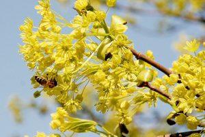 spring-333983_1280