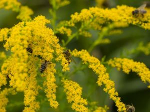 bees-1645203_960_720[1]